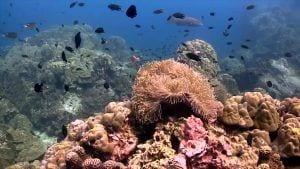 anandavilla.com kohtao thailand padi scuba diving course